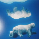 """Polar Obsession"" - Paul Nicklen"